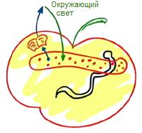 2011-12-27_rav_kitvey-rb-1989-11-kohot-she-tzrihim_lesson_pic06