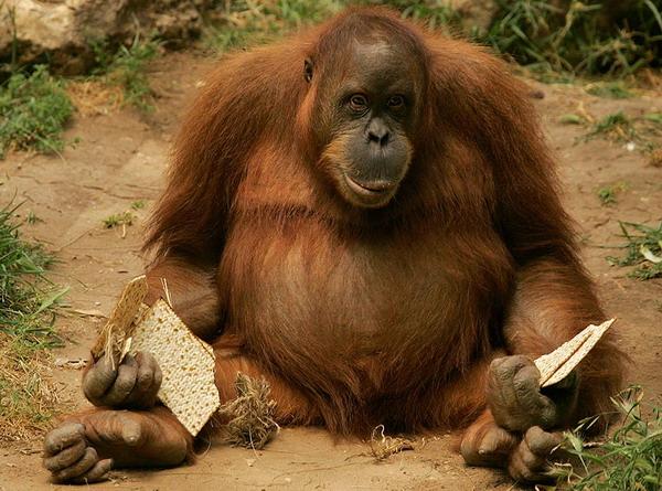 safari_00eh5p71_600.jpg